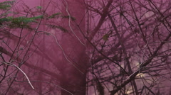 View through the trees of a pink haze left in the air from a smoke grenade Stock Footage