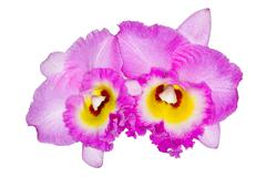 flower and orchid. - stock photo