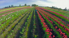 Aerial view of little boy running through a field of colorful flowers in bloom Stock Footage
