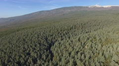 Forest of fir trees at Mont-Ventoux, France – aerial view by drone Stock Footage