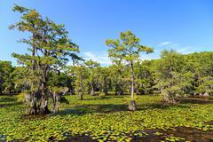 Cypress trees at Caddo Lake, Texas Kuvituskuvat