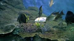 Under water aquarium fish tank Stock Footage