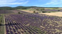 Lavender fields and old stone barns, Ferrassieres, Drome, France by drone Stock Footage