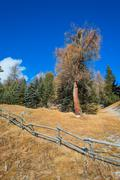 Wooden fence in the mountains with larch - stock photo