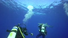 Blue shark in blue water with diver Stock Footage