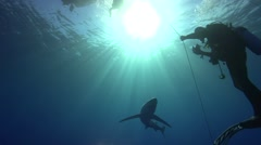 blue shark in blue water checking on diver - stock footage