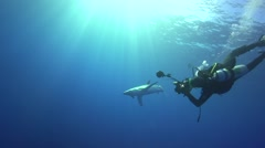 blue shark in blue water with diver taking photos - stock footage