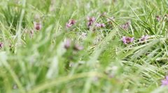 Flowers in the grass 2 - stock footage