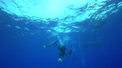 Blue shark in blue water aproaches Stock Footage