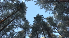 Circling the sky above my head. High pines. Rotation of the sky in 4K. Stock Footage