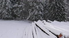 Route D111 road through fir tree forest in the snow, Chamrousse, Isere, France - stock footage