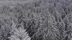 Fir trees in the snow in a mountain forest near the ski resort of Chamrousse, - stock footage