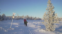 Cross country skiing in the Scandinavian mountains Stock Footage
