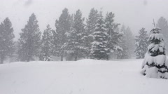 Snowstorm in Forest -  Panning Shot Stock Footage