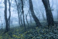 Spring forest in fog. Beautiful natural landscape. Vintage style - stock photo
