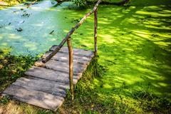 wooden bridge in swamp with duckweed - stock photo