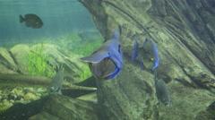 Aquarium, Fish Tank, Sea Creatures, Underwater, Animals, Nature. 4K UHD. Stock Footage