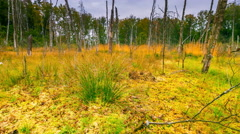 4k timelapse with wetlands and dead trees at autumn. Stock Footage