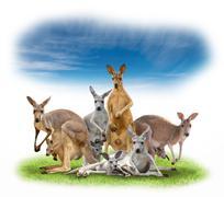 Group of kangaroo Kuvituskuvat