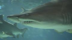 Shark. Aquarium, Fish Tank, Sea Creatures, Underwater, Animals, Nature. 4K UH Arkistovideo