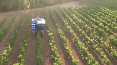 Vineyard picking vehicle harvesting grapes in the early morning, Trets, Rhone - stock footage
