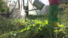 Country man water garden Stock Footage