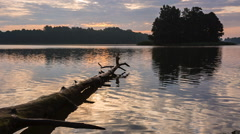 Morning lake landscape with dead tree trunk. Stock Footage