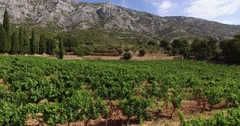 Vineyard and Sainte-Victoire mountain, Provence, France by drone Stock Footage