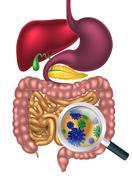 Gut Bacteria Magnifying Glass - stock illustration