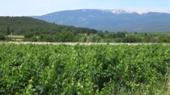Fields of vines at a vineyard, Ventoux, Provence, France by drone Stock Footage