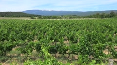 Vines in fields at a vineyard, Ventoux, Provence, France, by drone Stock Footage
