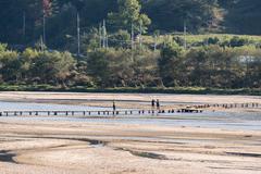 YEONGJU, KOREA - OCTOBER 15, 2014:  people on a single lane log bridge in Mus Stock Photos