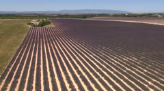 Lavender fields on the Plateau de Valensole in summer, Provence, South of France - stock footage