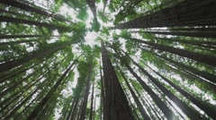 Looking up at a Pine Forest with light beaming through trees Stock Footage