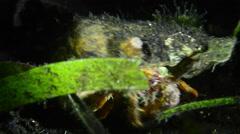 Hermit Crab Stock Footage