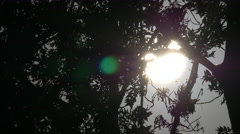 Glowing sun seen through branches of a tree, Cluj-Napoca Stock Footage