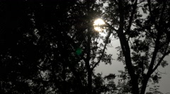 Sun seen through branches of a tree, Cluj-Napoca Stock Footage