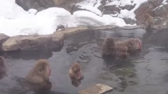 Snow monkeys in natural onsen.mp4 Stock Footage