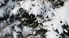 Christmas tree in winter wood. Dolly shot. - stock footage