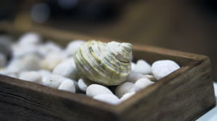Seashell on white pebble setting for summer elements Stock Footage