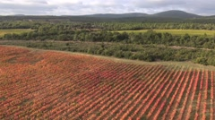 Flying over vineyards in Autumn, Ollieres, Var, Provence, France by drone Stock Footage