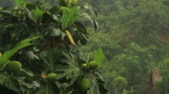 Tropical downpour - stock footage