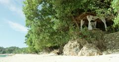 Philippines - Beach massage on the beach Stock Footage
