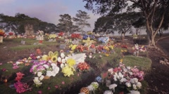 Colorful flowers in cemetery Stock Footage