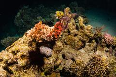 Night coral reef - stock photo