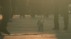 People walking their pet dogs on city street in sunset Stock Footage