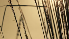 Dry grass swaying on cold winter wind, nature abstract - stock footage