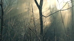 Misty morning, detail from rural landscape Stock Footage