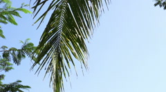 Shot on tropical palm tree against blue sky Stock Footage