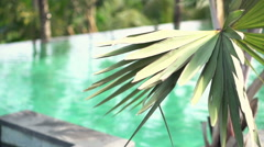 Shot on tropical palm tree near swimming pool super slow motion   Stock Footage